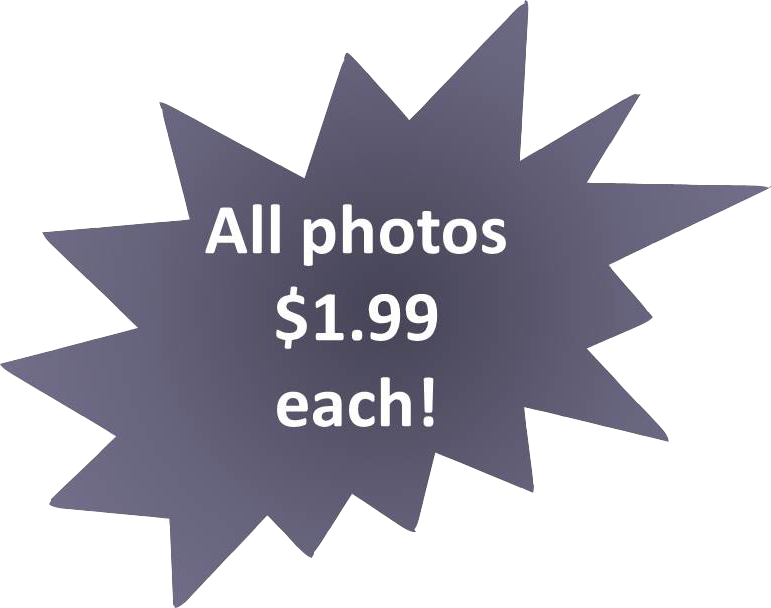 All royalty-free photos $1.99 each!